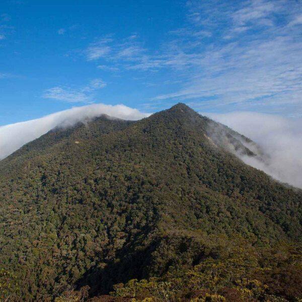 Climb Mount Trusmadi with Borneo Dream in Sabah, Malaysia.