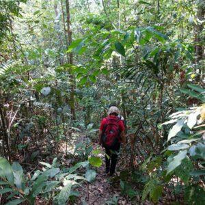 Jungle Trekking in Kiulu Valley, Sabah with Borneo Dream