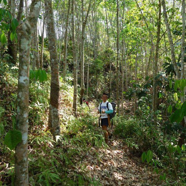 Jungle Trekking in Kiulu Valley, Sabah