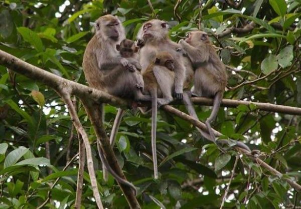 Explore the Klias Wetlands River Cuise Tour Kota Kinabalu