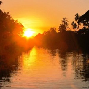 Klias Wetlands River Cruise - The Firefly and Proboscis Monkey Tour, Sabah, Malaysia