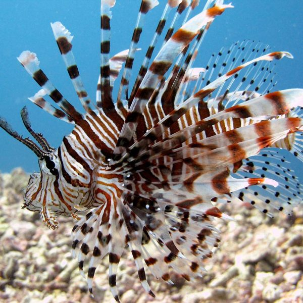 Group Special - Learn to Dive Kota Kinabalu
