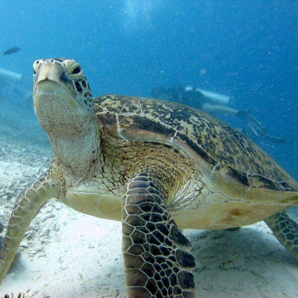 Turtle Island Tour Sandakan | Borneo Dream Dive Shop