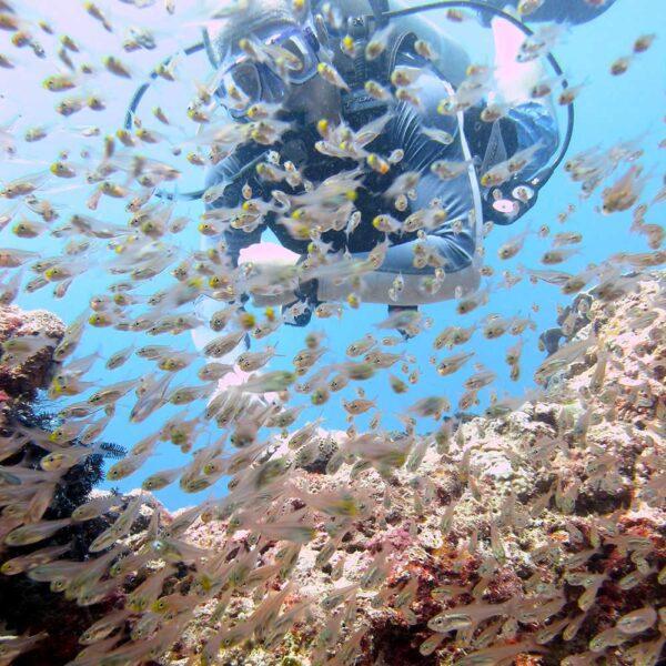 PADI Advanced Open Water Diver Course Kota Kinabalu