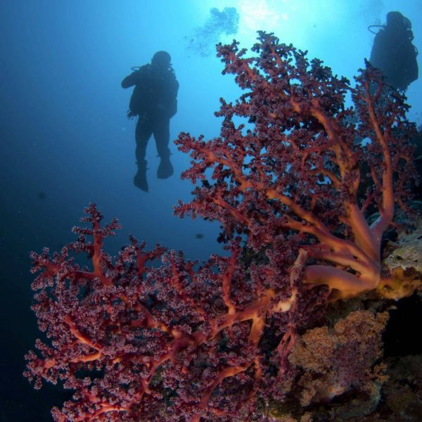 Dive Sipadan - Seaventures Dive Rig, Mabul, Borneo, Malaysia