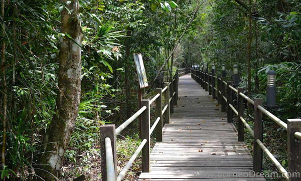 Raised walkway in camp at Sepilok Forest Reserve