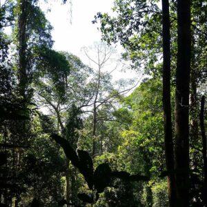 Sepilok Nature Reserve Trek in Sandakan, Sabah by Borneo Dream
