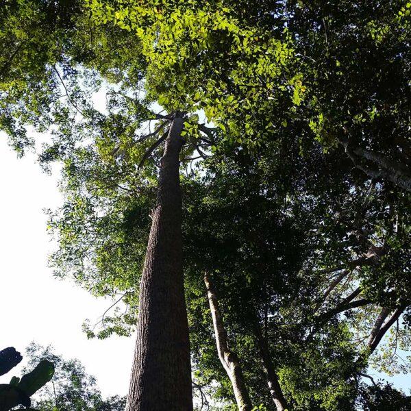 The lake at Sepilok Forest Reserve Trek start point Rain Forest Discovery Centre