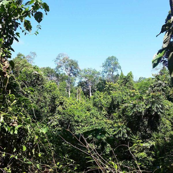 Primary Forest, Sepilok