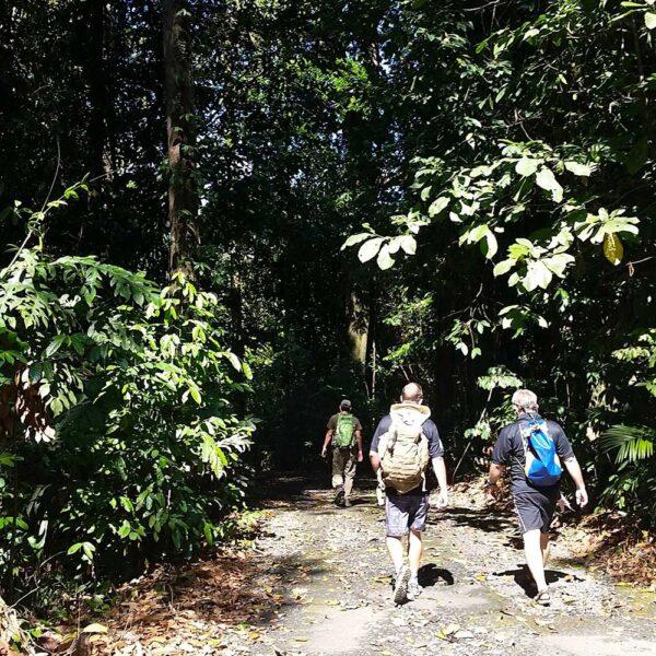 The Trek, Sepilok Forest Reserve
