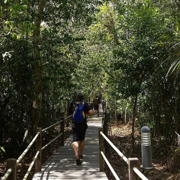 Raised walkway in Sepilok Forest Reserve
