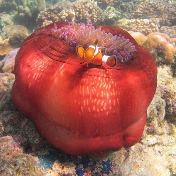 Unguided Snorkeling Tour, Kota Kinabalu, Sabah