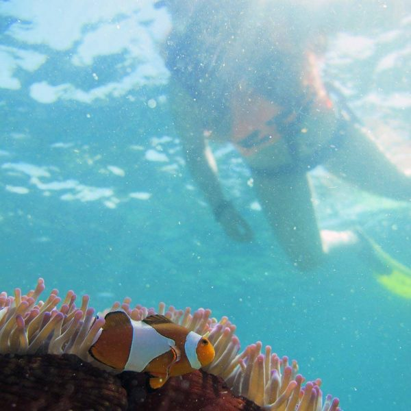 Guided Snorkelers on the surface of the sea in Kota Kinabalu