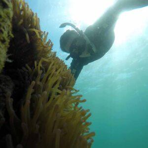 Snorkeling day trips Kota Kinabalu