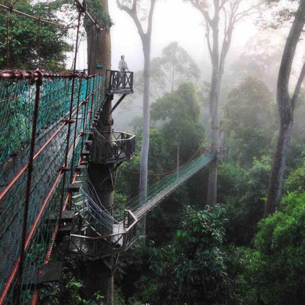 4D3N Danum Valley Package, Sabah, Malaysia