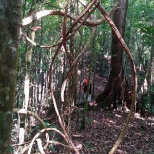 Pulau Gaya Jungle Trekking Day Tour