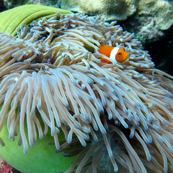 Underwater Camera Rental GoPro Hero3 or Canon G12 with Underwater Housing in Kota Kinabalu