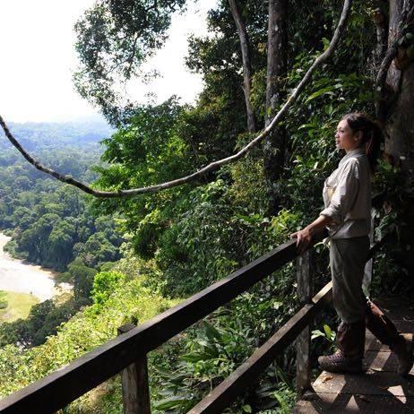 Viewing Point in Danum Valley