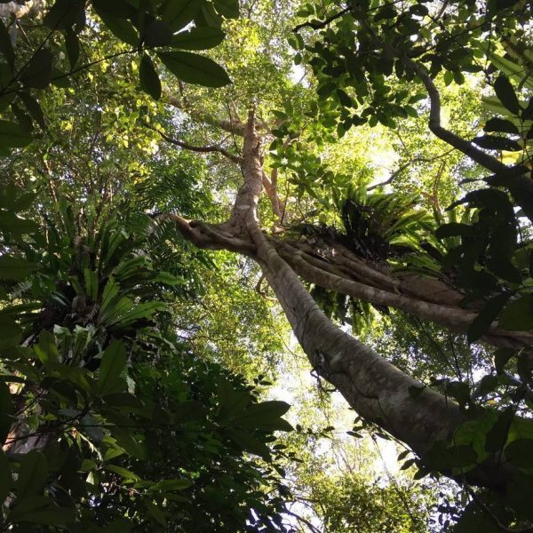 Borneo Rainforest Conservation
