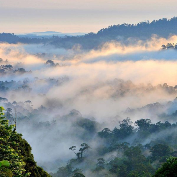 View over Danum Valley