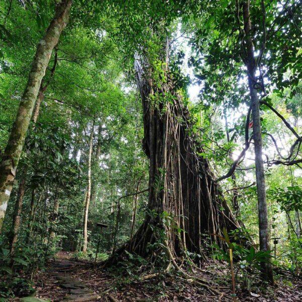 Nature trail near Borneo Rainforest Lodge