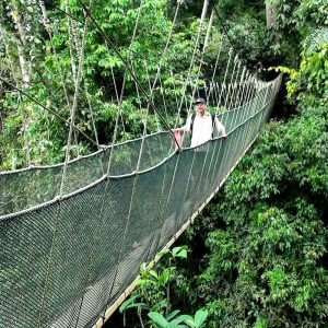 Canopy walks in Poring Hot Springs as part of kundasang sabah package