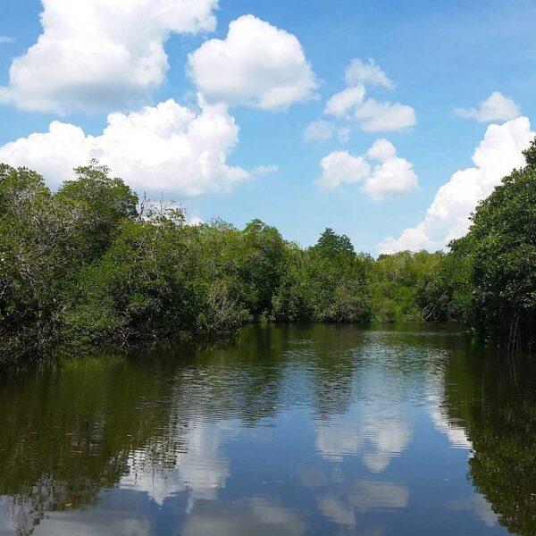 Kinabatangan river from Sepilok Reserve Trek to Sandakan