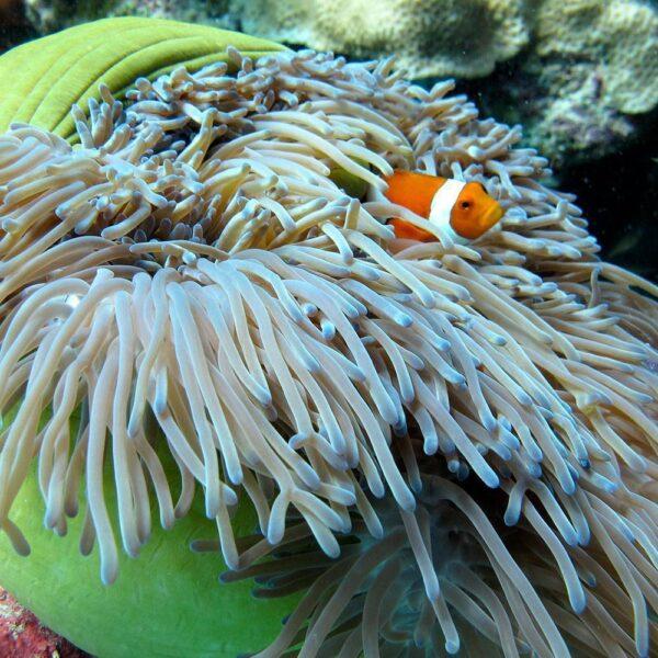 PADI Scuba Diver Upgrade Course | Nemo