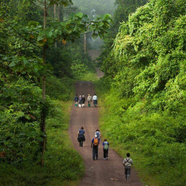 Trail in Danum Valley