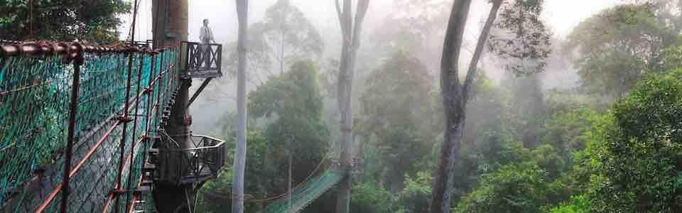 Danum Valley Canopy Walkway