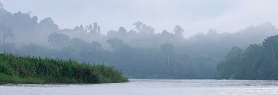 Kinabatangan River cruise on your own with Borneo Dream